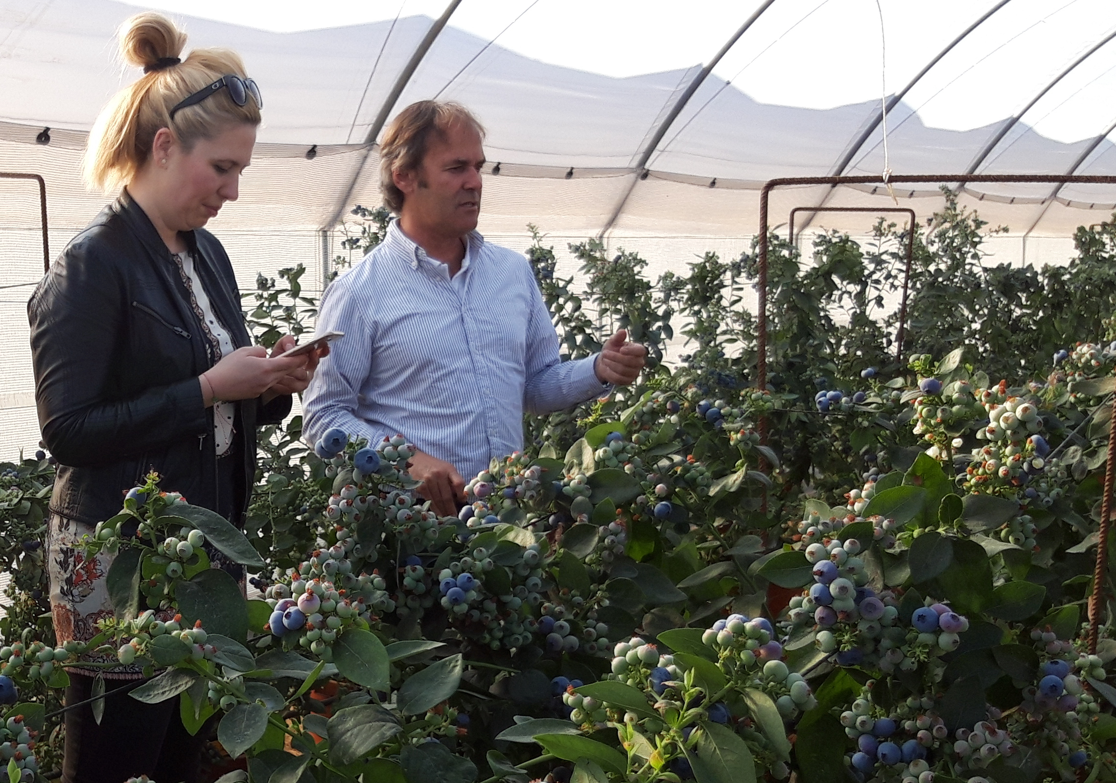 Tesco visits Planasa's facilities to see  the new blueberry varieties